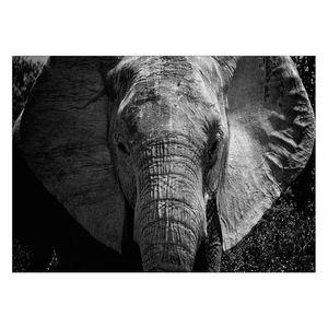 تابلو شاسی ونسونی طرح Elephant Face سایز 50x70 سانتی متر