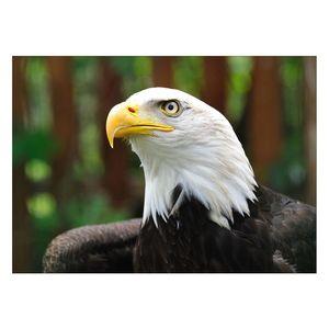 تابلو شاسی ونسونی طرح White Head Eagle سایز 30x40 سانتی متر