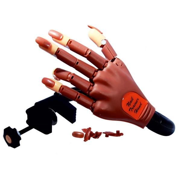 ماکت آموزشی دست نوباراکس مدل مفصل دار