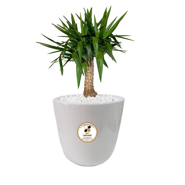 گیاه طبیعی یوکا گلباران سبز گیلان مدل GN12-16L