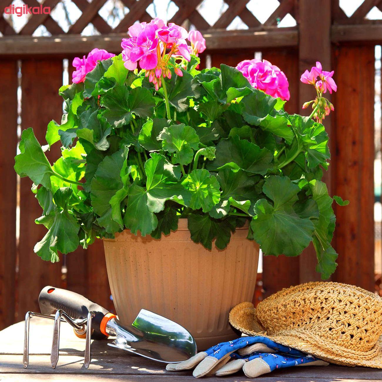 بذر گل شمعدانی پاکوتاه الوان وانیا سید مدل N76 main 1 5