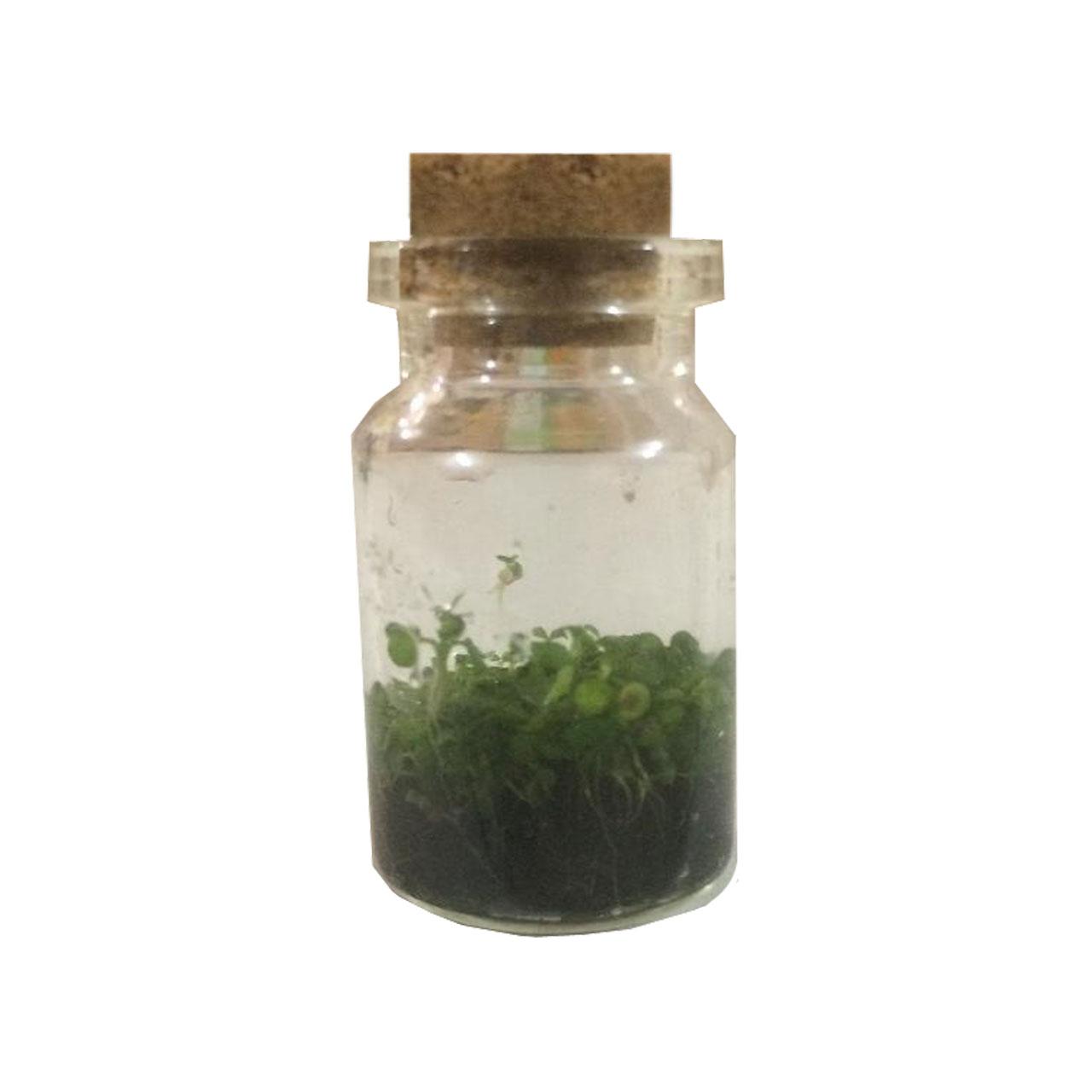 بطری گل طبیعی ریحون طرح زینتی