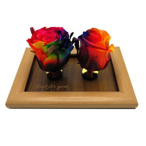 گل رز جاودان اترنال بلومز مدل Rainbow