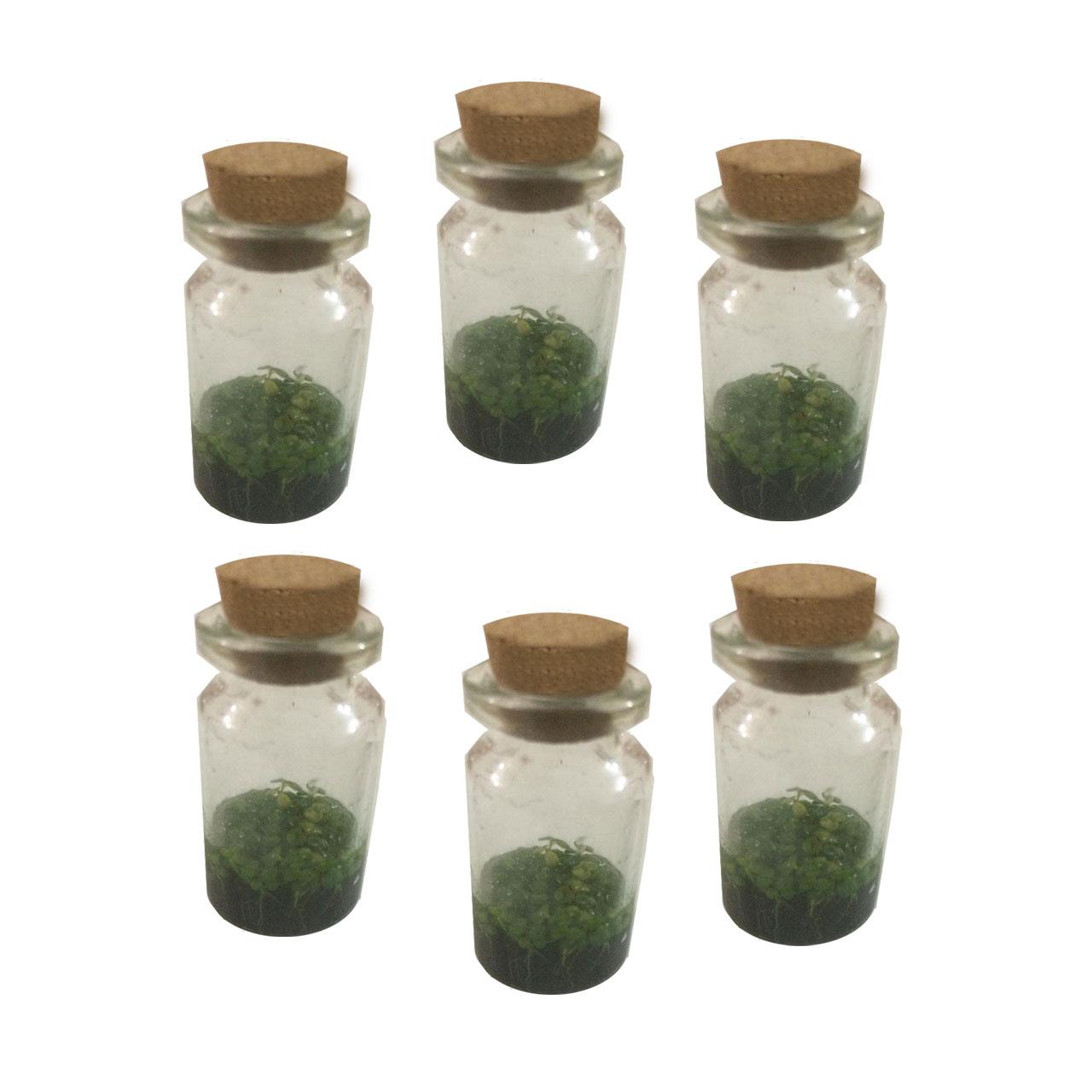 بسته 6 تایی بطری گل طبیعی طرح زینتی ریحون