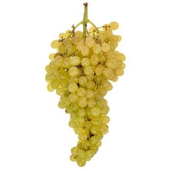 انگور سفید بی دانه Fresh مقدار 500 گرم