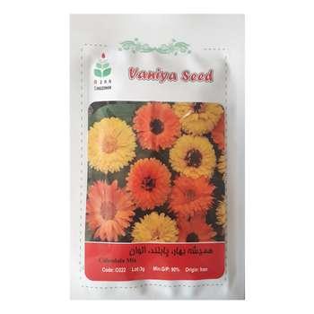 بذر گل همیشه بهار پابلند الوان آذر سبزینه مدل A56