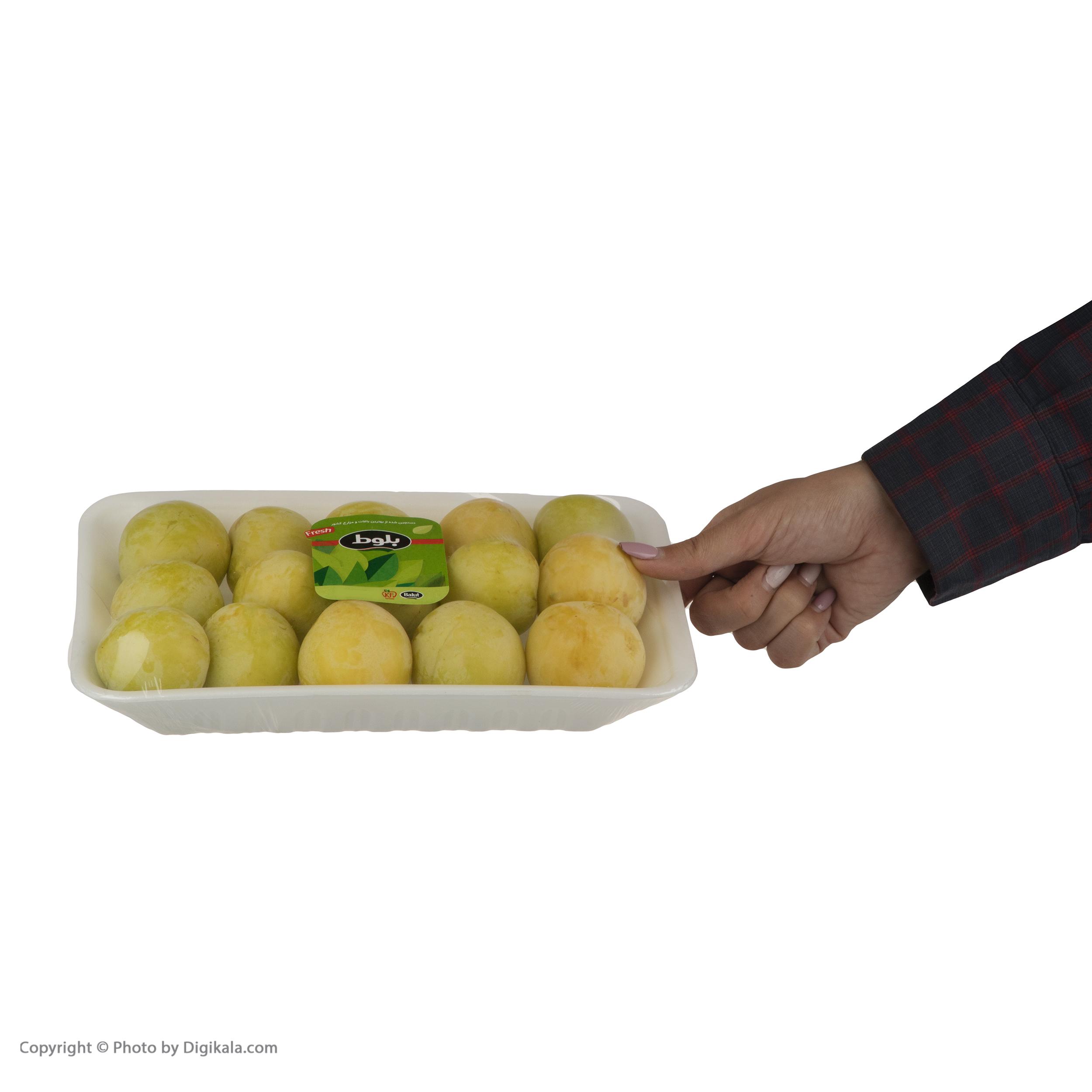 آلو زرد بلوط - 1 کیلوگرم