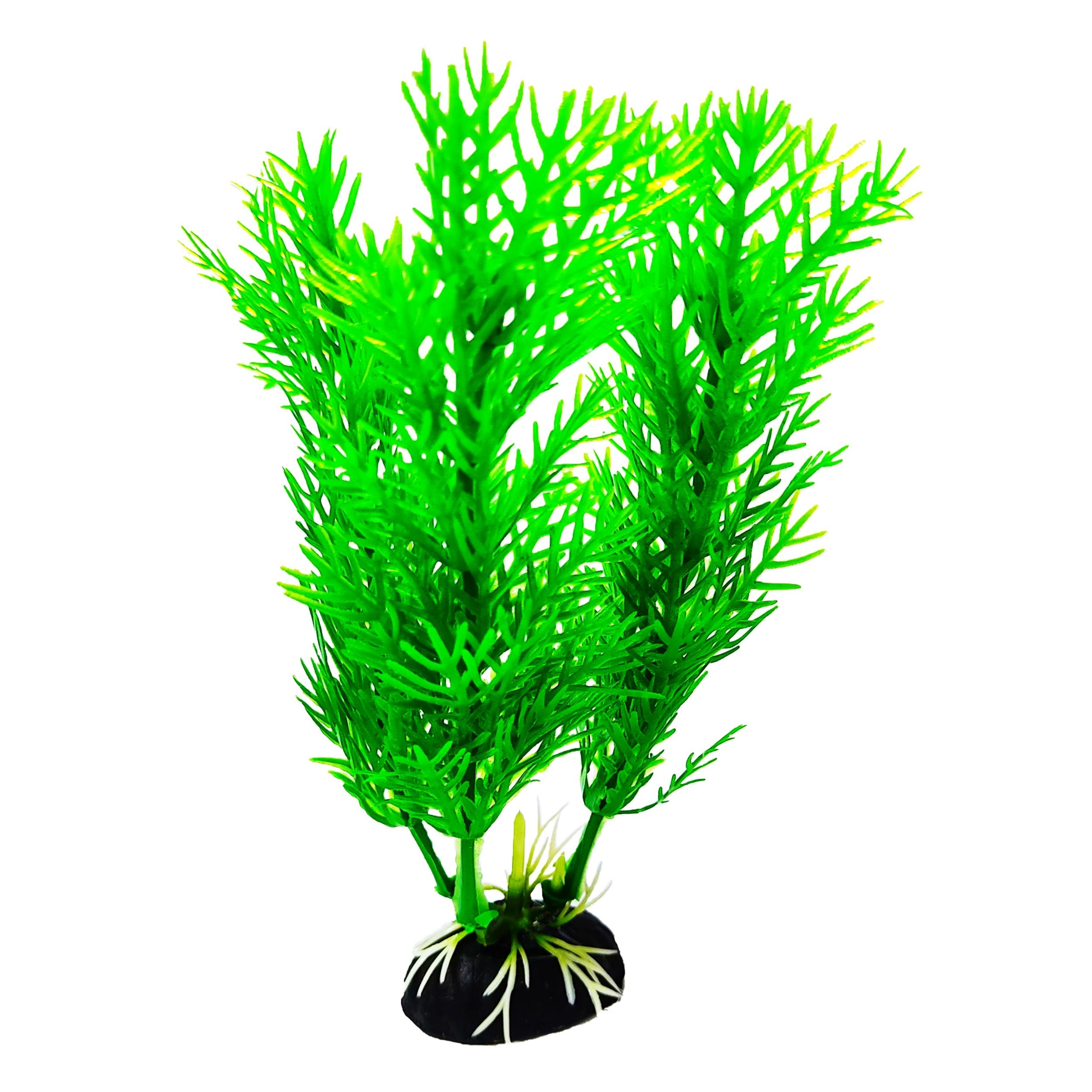 گیاه تزیینی آکواریوم کد 13