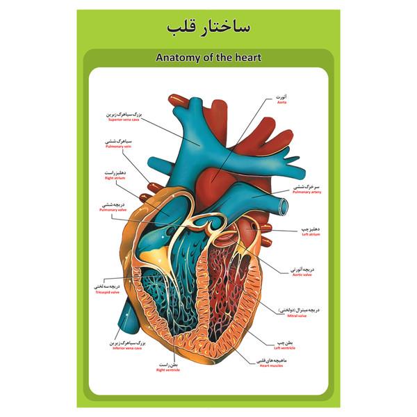 پوستر آموزشی طرح آناتومی ساختار قلب