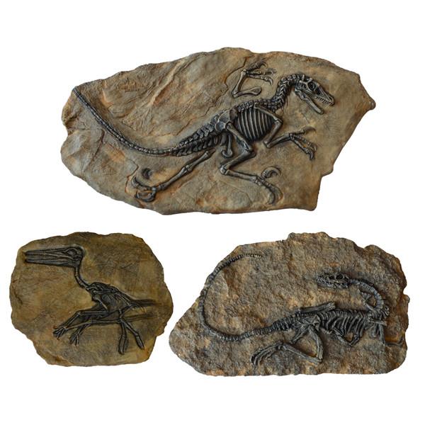 دیوارکوب مدل فسیل دایناسور مجموعه 3 عددی