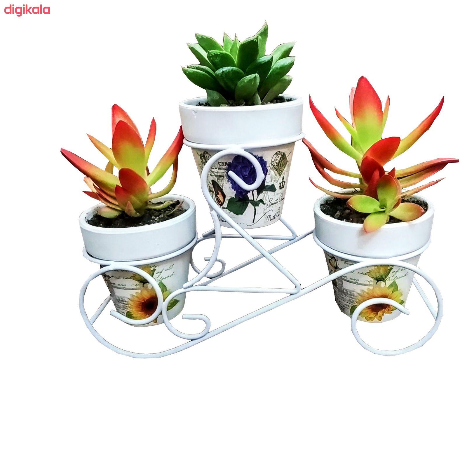 گیاه طبیعی ساکولنت مدل B-5 مجموعه 3 عددی main 1 1