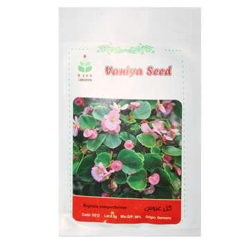 بذر گل عروس -بگونیا آذر سبزینه مدل A137