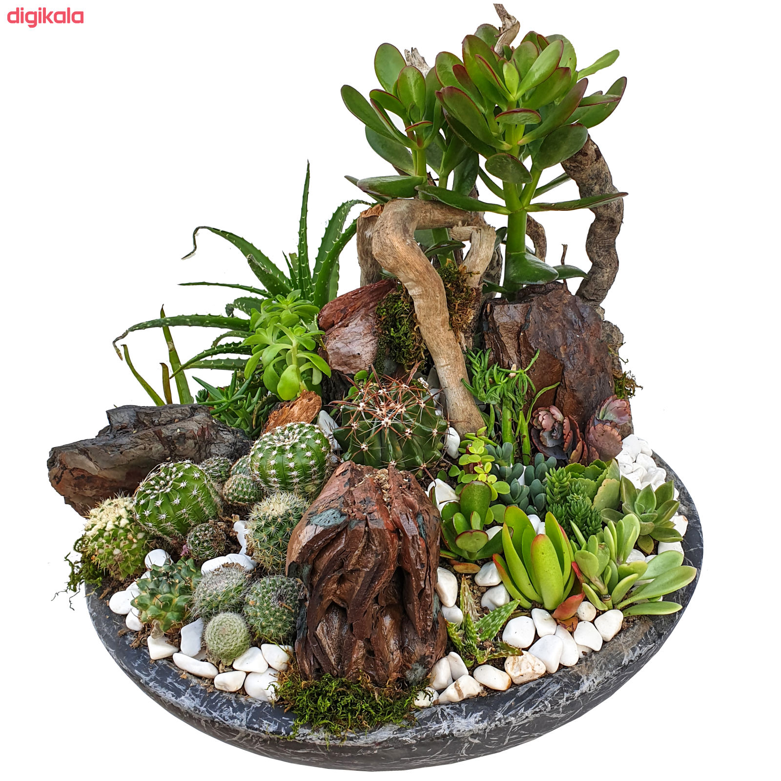 گیاه طبیعی کاکتوس مدل MK-99006 main 1 2