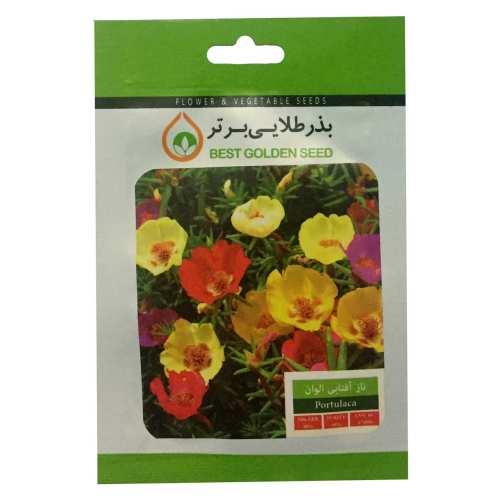 بذر گل ناز آفتابی الوان بذر طلایی برتر کد BZT-36