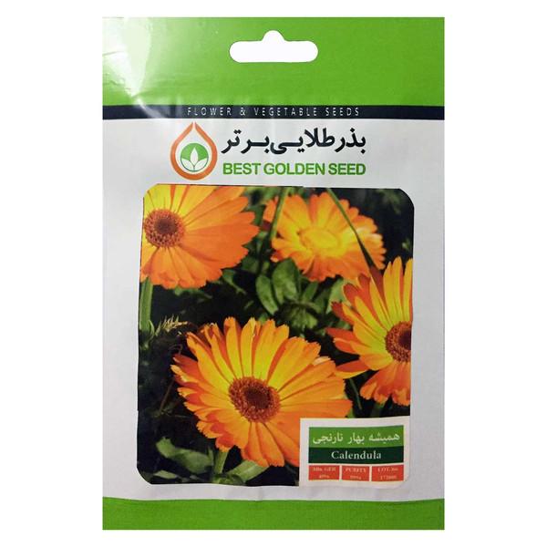 بذر گل همیشه بهار نارنجی بذر طلایی برتر کد BZT-38