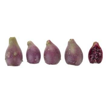 کاکتوس مقدار 0.5 کیلوگرم | Prickly Pear 0.5 Kg