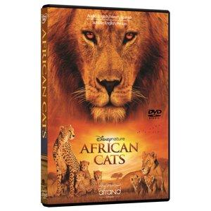 مستند گربه های آفریقایی  اثر کیت اسچولی