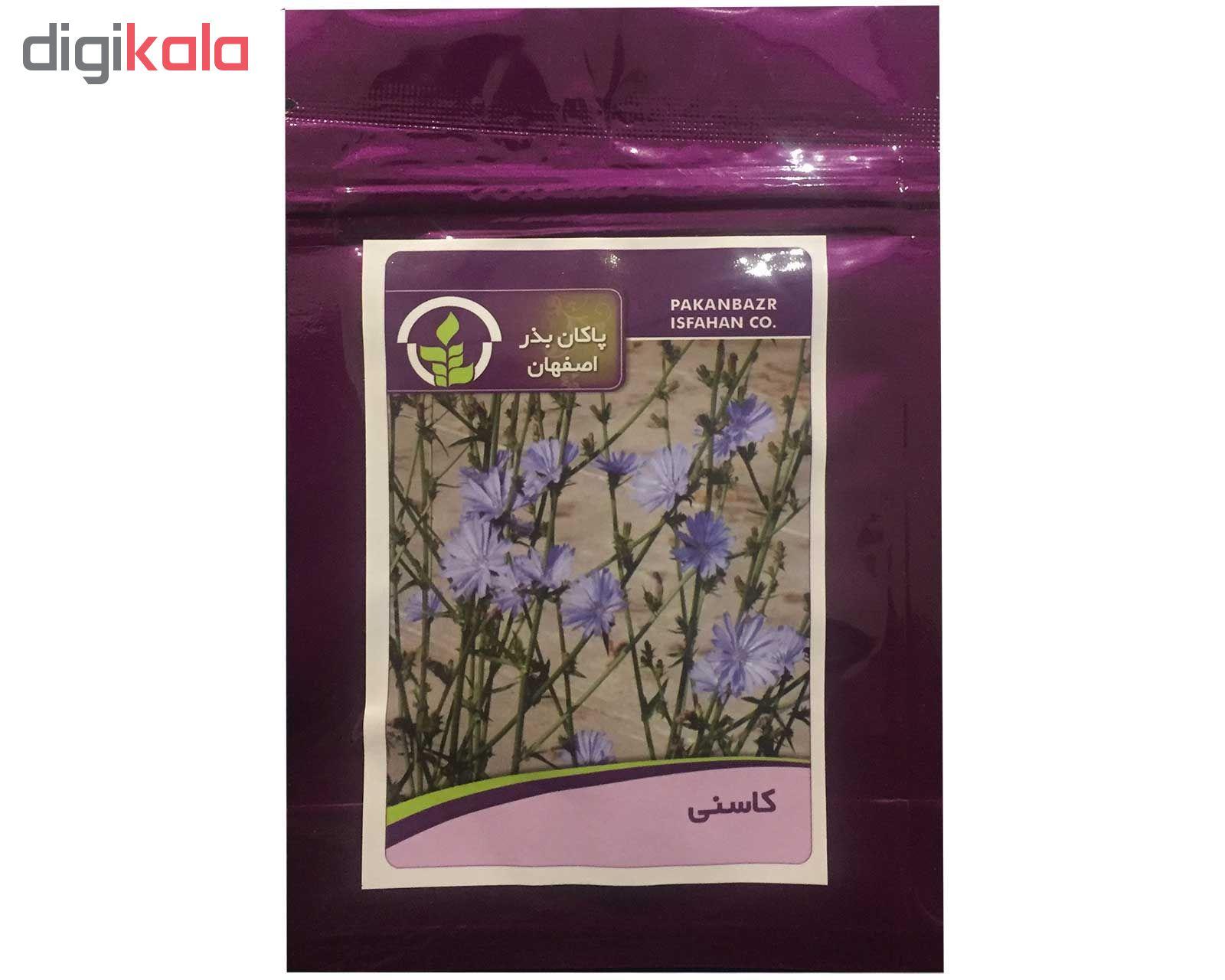 بذر کاسنی پاکان بذر اصفهان کد PBF-45