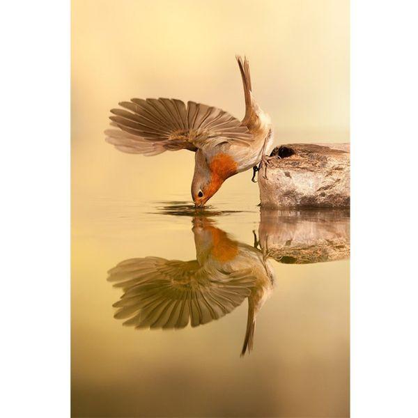 تابلو شاسی گالری هنرآرا طرح پرنده تشنه کد 11107