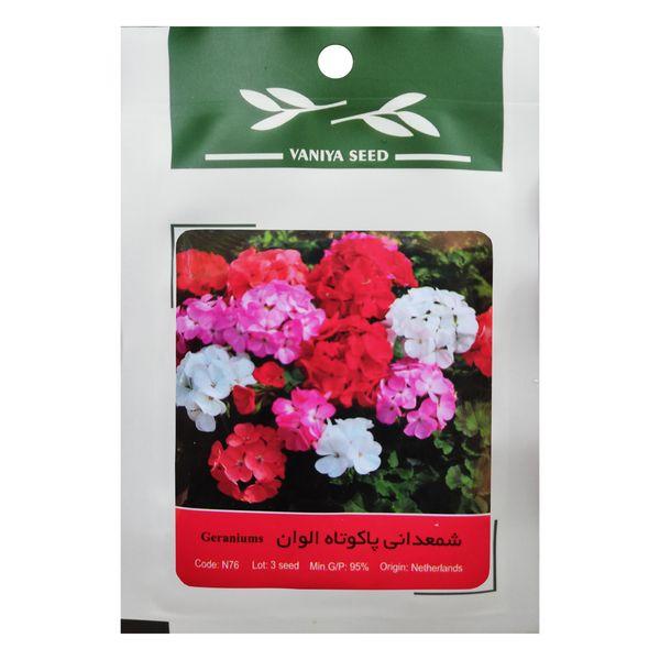بذر گل شمعدانی پاکوتاه الوان وانیا سید مدل N76