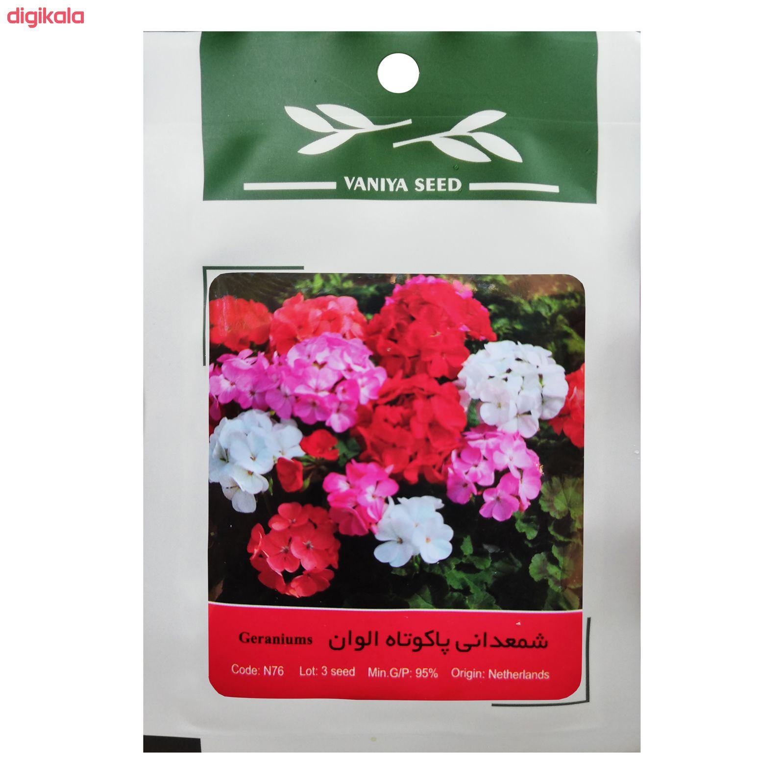 بذر گل شمعدانی پاکوتاه الوان وانیا سید مدل N76 main 1 1