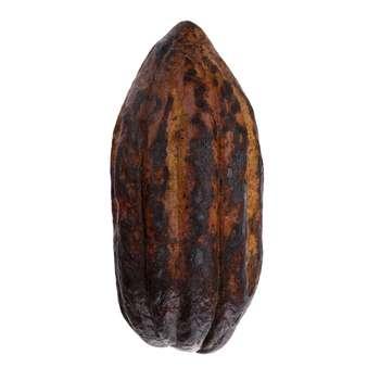 میوه کاکائو بسته 1 عددی