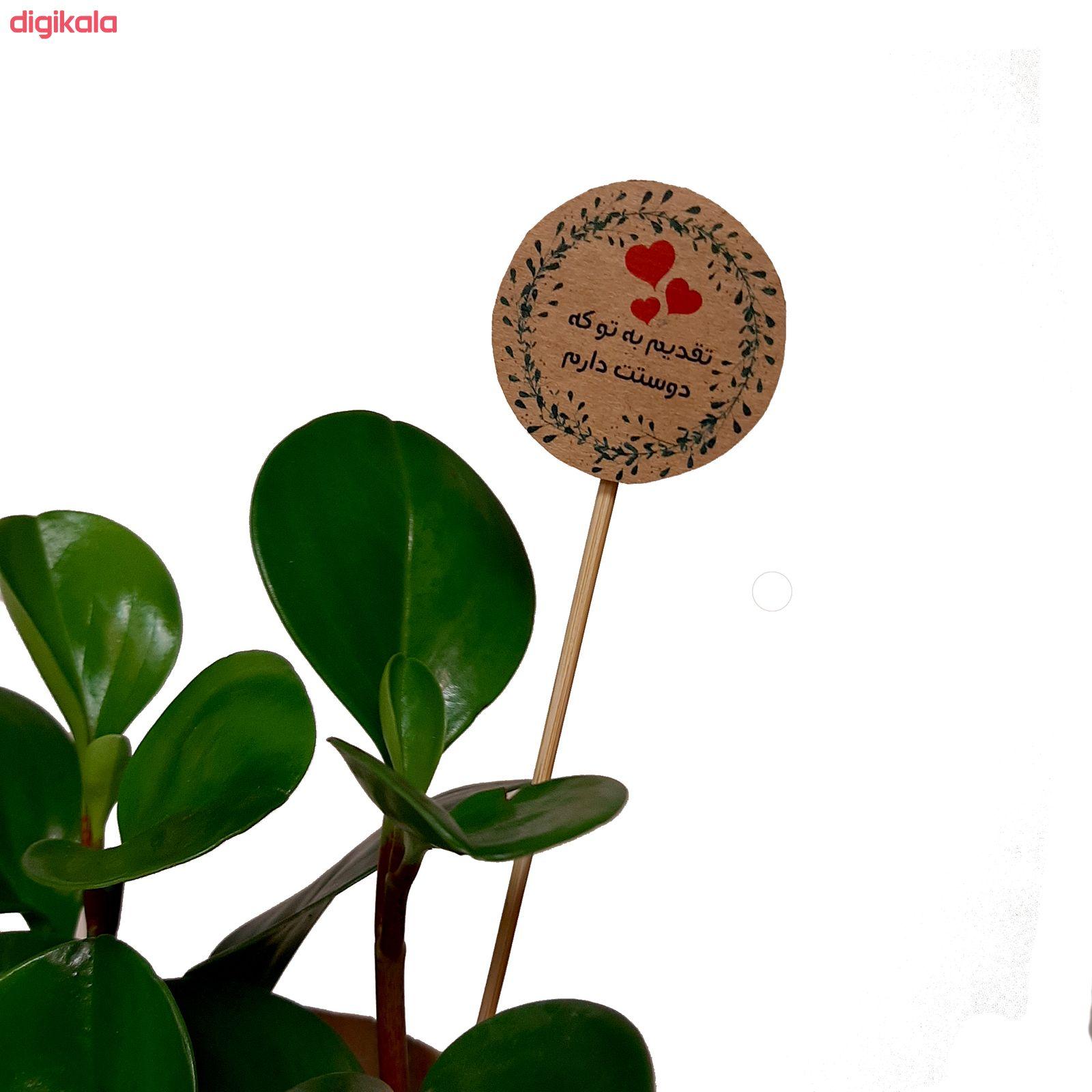 گیاه طبیعی قاشقی کد 02.A.P main 1 2