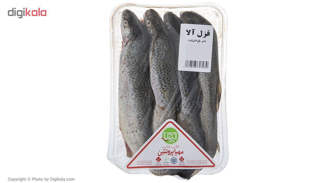 ماهی قزل آلا شکم خالی مهیا پروتئین مقدار 1000 گرم