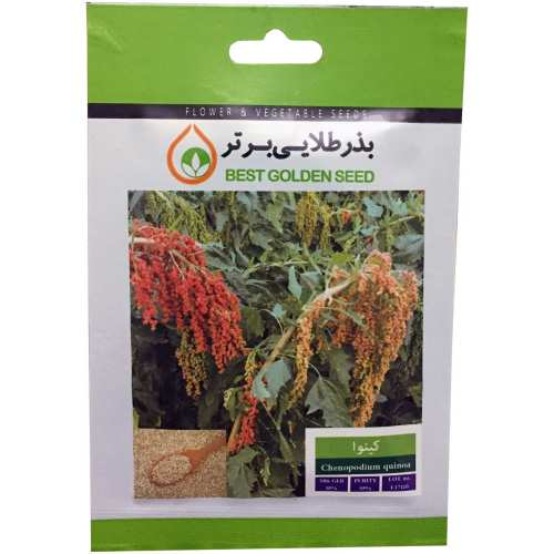 بذر گیاه دارویی کینوا بذر طلایی برتر کد BZT-104