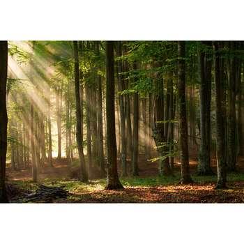 تابلو شاسی طرح طبیعت ارامش بخش کد 192
