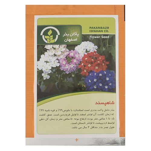 بذر گل شاهپسند پاکان بذر