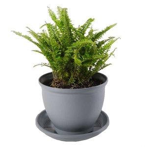 گیاه طبیعی سرخس مدل P-07