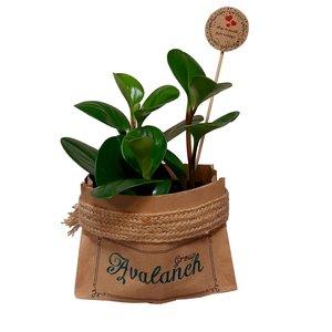 گیاه طبیعی قاشقی کد 02.A.P