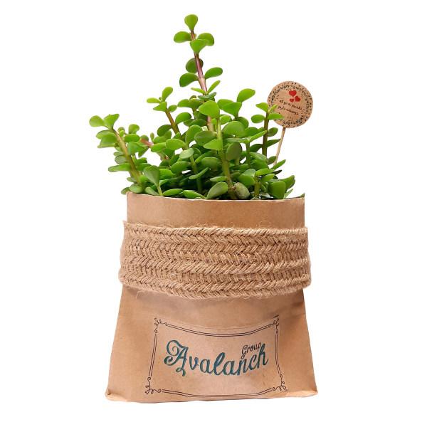 گیاه طبیعی خرفه کد P.A.03
