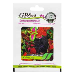 بذر گل حسن یوسف الوان گلبرگ پامچال کد GPF-100