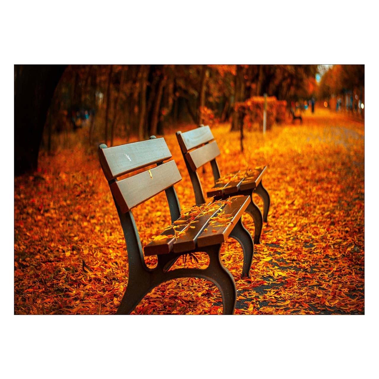 تابلو شاسی ونسونی طرح Lonely Bench in Autumn  سایز 30x40 سانتی متر