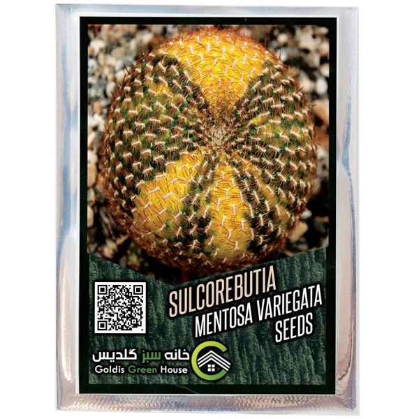 بذر کاکتوس سولکوربوتیا منتوسا ابلق خانه سبز گلدیس کد 36