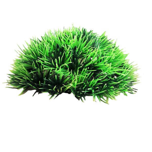 گیاه تزیینی آکواریوم کد 017