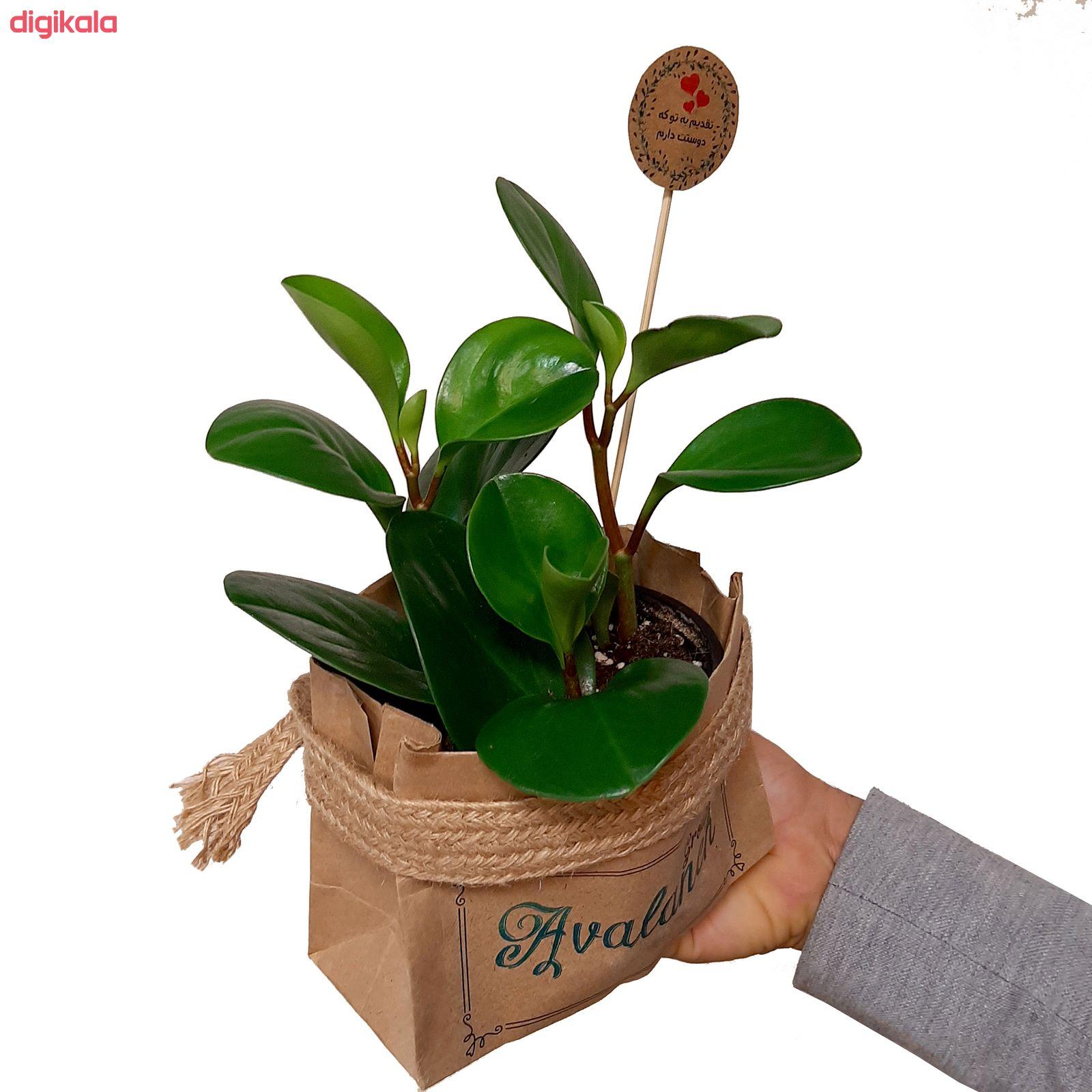 گیاه طبیعی قاشقی کد 02.A.P main 1 1