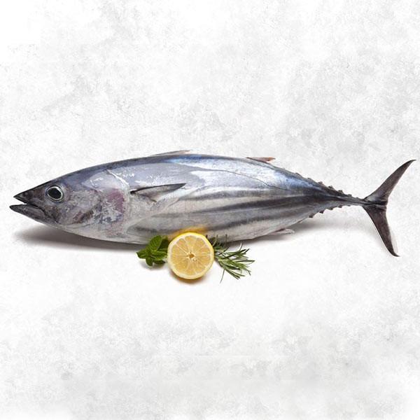 فیله ماهی تن هوور تازه جنوب - 2000 گرم