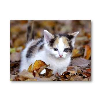 تابلو شاسی مدل گربه کد5