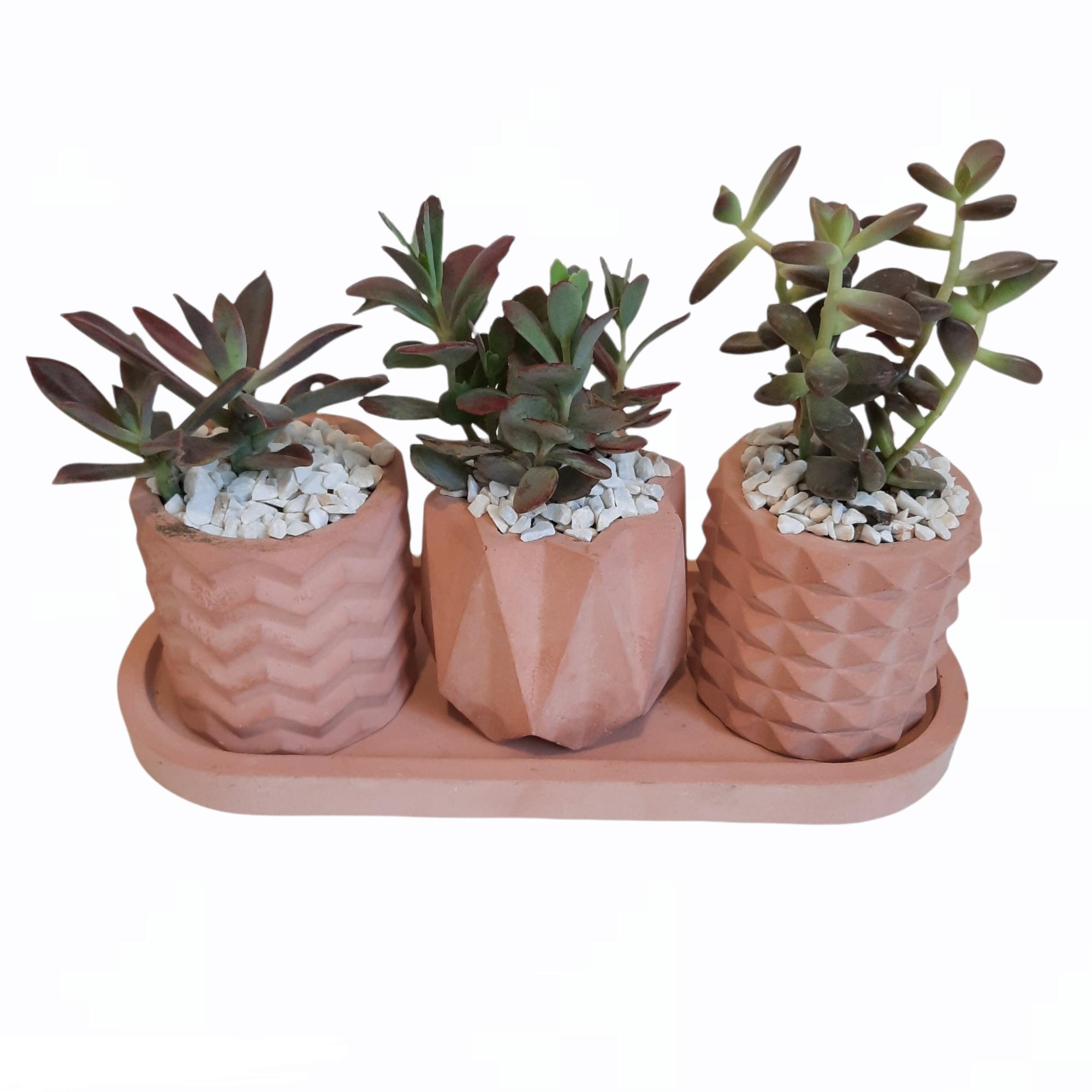 گیاه طبیعی ساکولنت و کاکتوسکد B مجموعه 3 عددی
