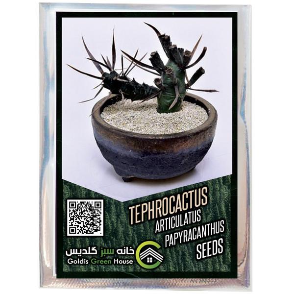 بذر تفرو کاکتوس آرتیکولاتوس پاپیراکانتوس خانه سبز گلدیس کد 39