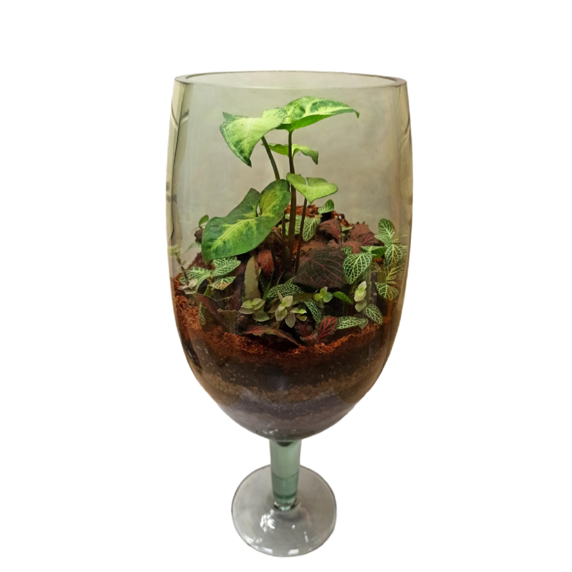تراریوم گیاه طبیعی کد 103