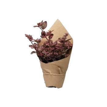 گیاه طبیعی گل سنگ صورتی کد gs16