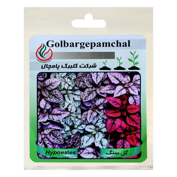 بذر گل سنگ گلبرگ پامچال کد GPF-165