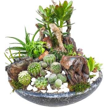 گیاه طبیعی کاکتوس مدل MK-99006