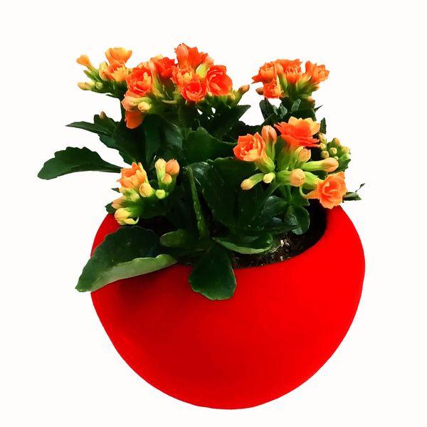 گیاه طبیعی کالانکوا مدل A-10