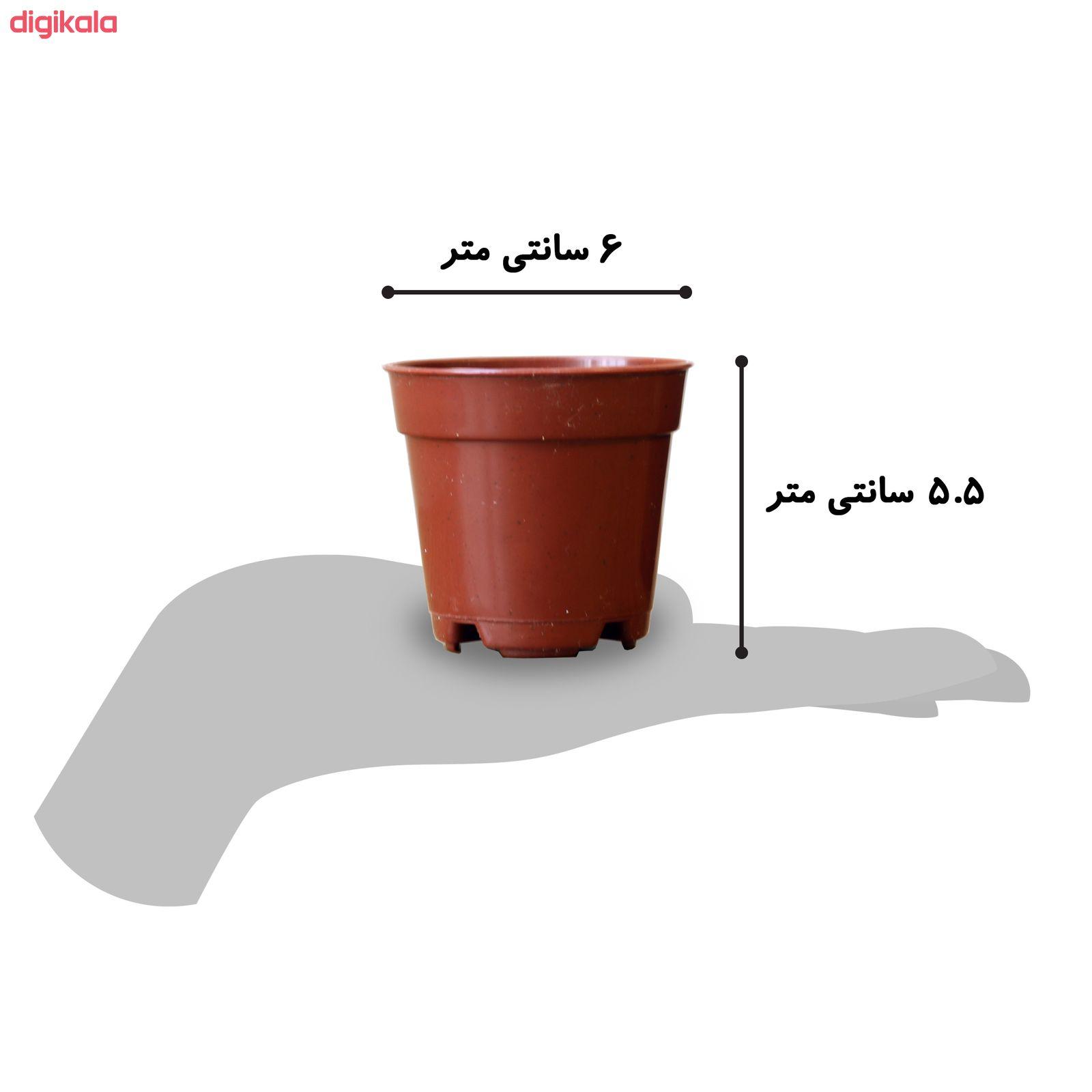 گیاه طبیعی ساکولنت آیدین کاکتوس کد CB-003 بسته 12 عددی main 1 9