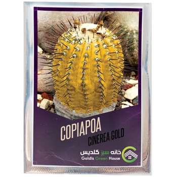 بذر کاکتوس کوپیاپوا سینره آ گلد خانه سبز گلدیس کد 20